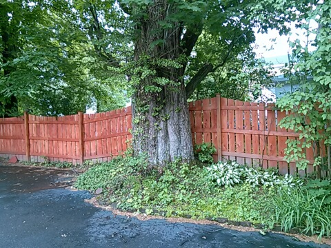 stain-wood-fence